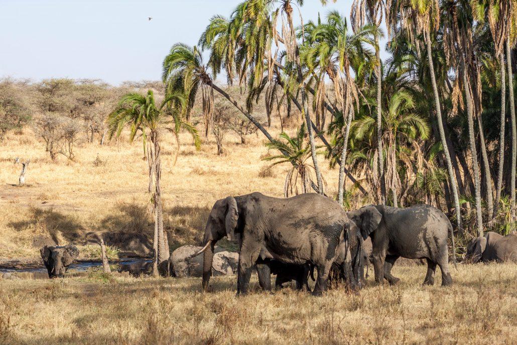 serengeti safari turu